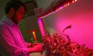 hızlı bitki yetiştirme